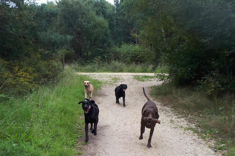 Alfie, Kiwi, Boopee & Bruno