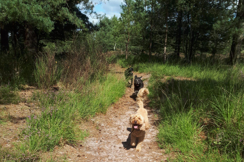 Alfie, Fin & Horace