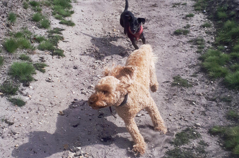 Horace & Dudley