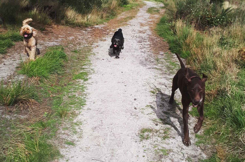 Horace, Fin & Bruno